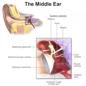 otitis media treatment middle ear