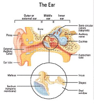otosclerosis parts of the ear
